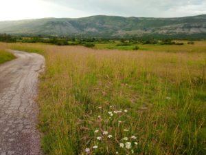 Ponikva field in Bitelić