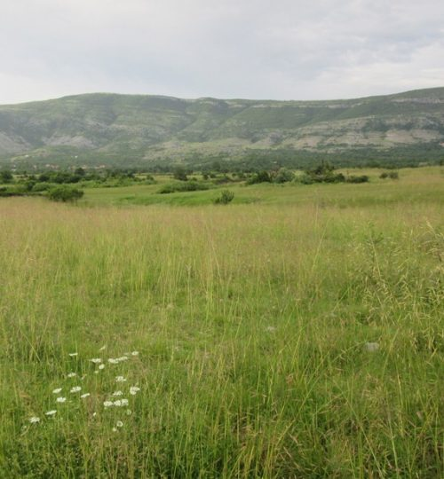 Ponikva field