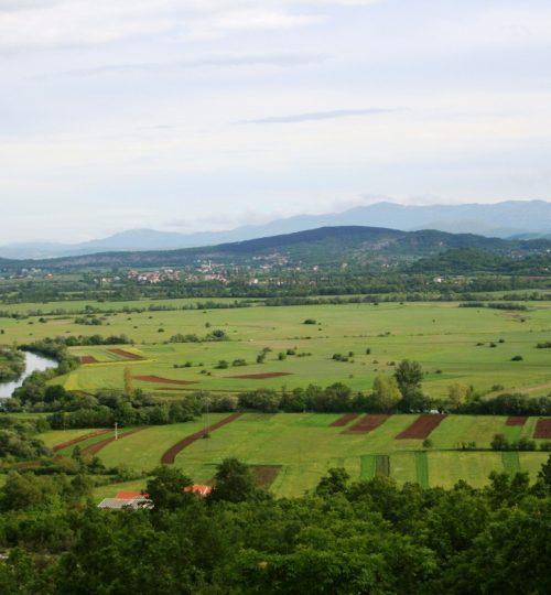 Rumin field